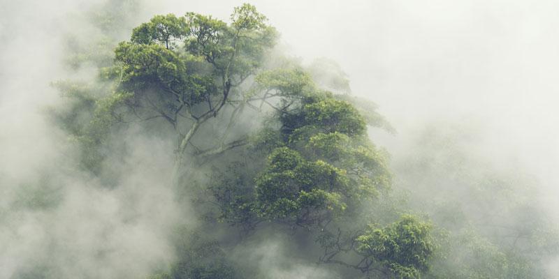Erfolgreich durch den Multi-Cloud-Dschungel